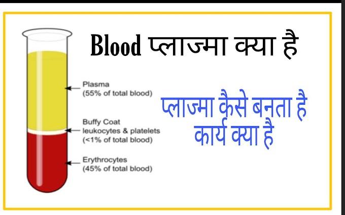 Blood Plasma क्या है कार्य और कैसे बनता है ?