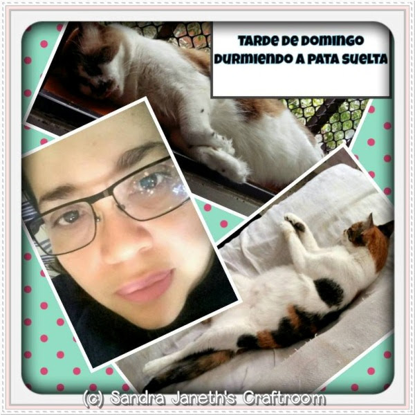 Gatos, Menchis, Coco