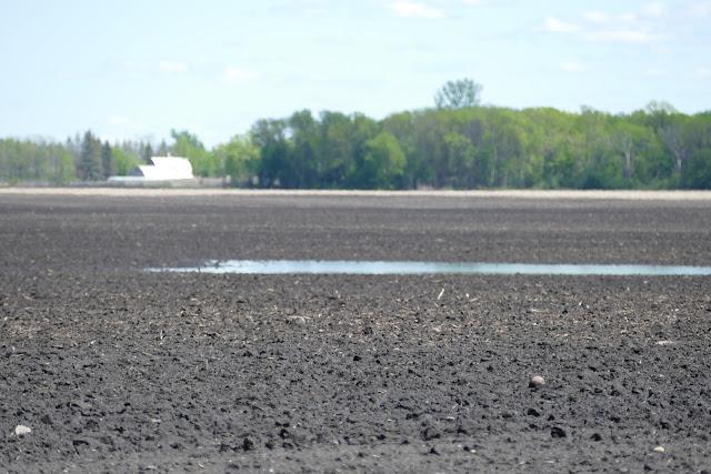 wet spring nitrogen loss