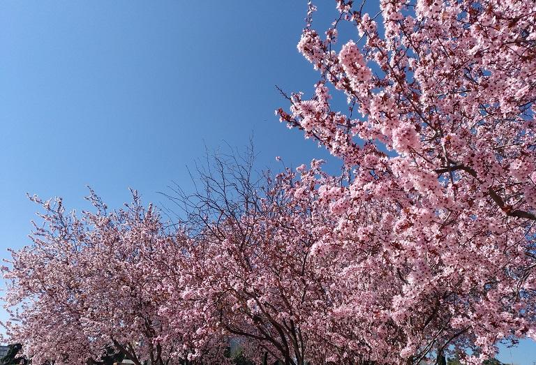 mejor-epoca-visitar-madrid-primavera