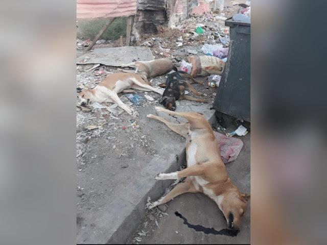 """تنامي ظاهرة الكلاب الضالة يدفع مواطنين إلى تطبيق """"شرع اليد"""" للتخلص منها"""