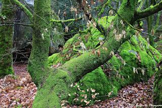 50 nuance de green, Forêt de Fontainebleau
