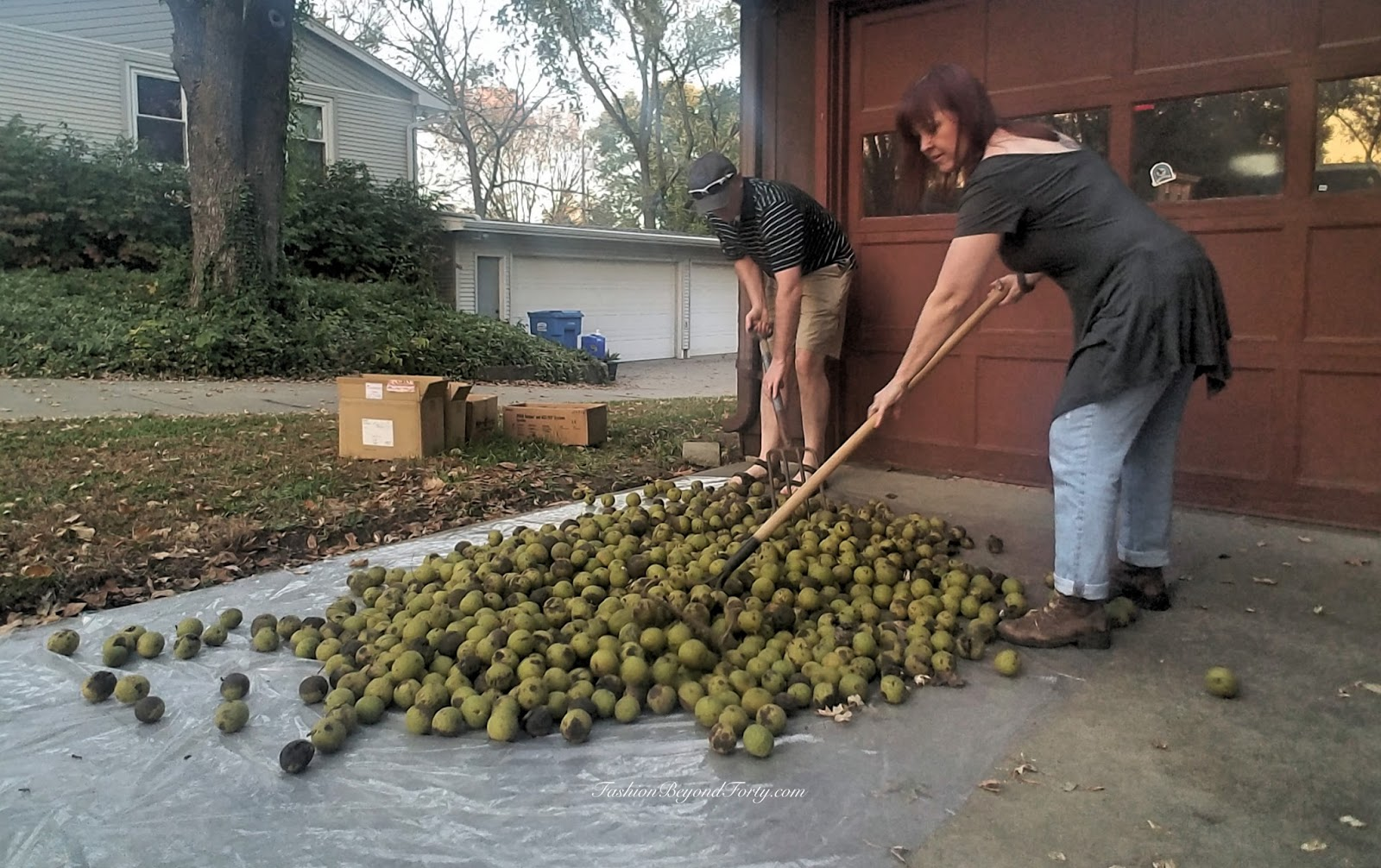 Two Nuts Harvesting Walnuts In The Fall