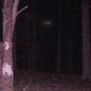 Game cam photo of possible bigfoot!