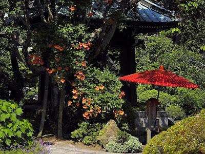 Nouzen-kazura (Campsis grandiflora) flowers: Kaizo-ji