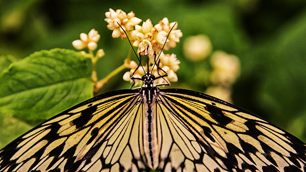 Butterfly &Bee Macro and Close-Up Photography - Joseph Inns