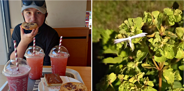 A trip to Costa and a white moth
