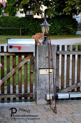 Katze Mimi erwartet ihre Zweibeiner
