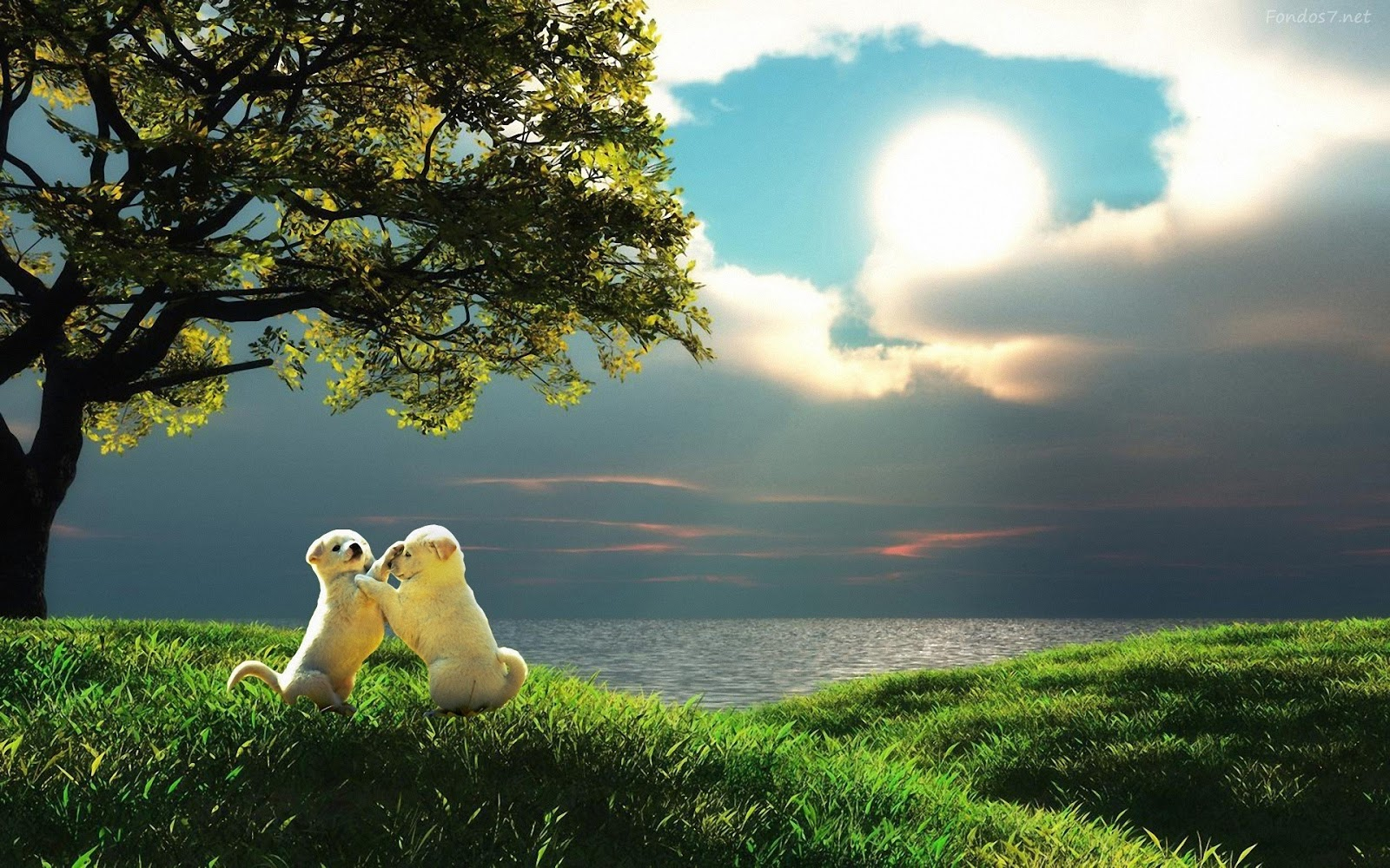 Perros Husky Siberiano Fondos De Pantalla Hd De Animales 2: Trololo Blogg: Wallpaper Hd De Cachorros