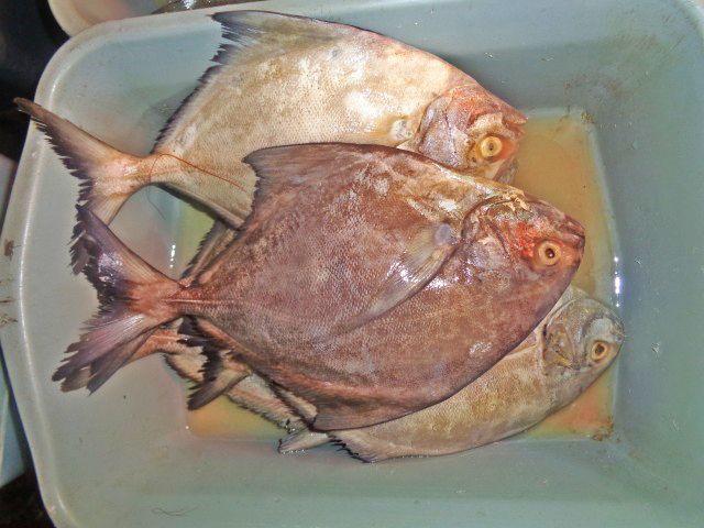 Ikan Bawal Mentah