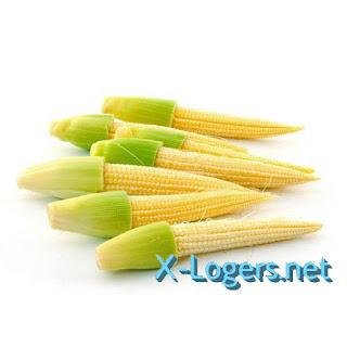 Jagung Muda Baby Corn Fresh
