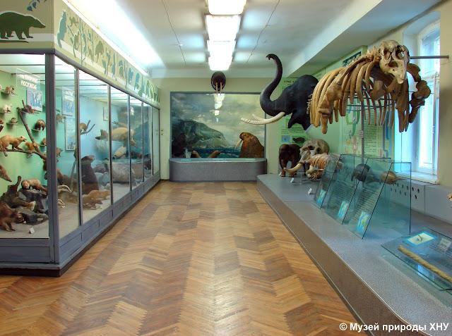 Харьковский Музей природы, Музей природы Харькова - зал Млекопитающие