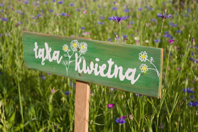 Łąka kwietna i lawendowa lemoniada