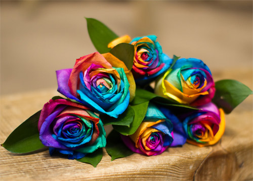 nhuom hoa hong 7 mau