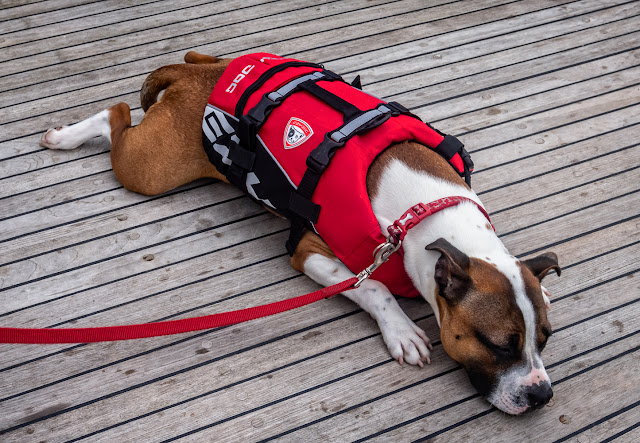 Photo of Ruby laying on Ravensdale's aft deck in her new lifejacket