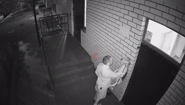 В Краснодаре мужчина избил пса, вернувшегося домой после исчезновения