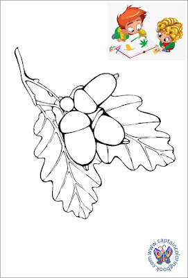 Free coloring pages acorn