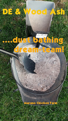 Wood ash, DE, dust bath for chickens