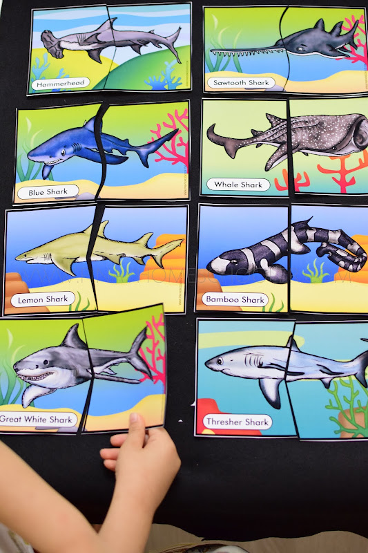 Sharks Themed Unit: Head and Tail Puzzles