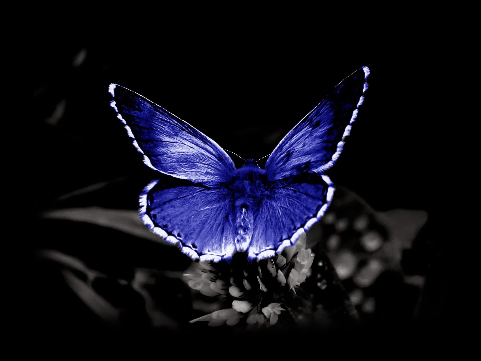 dark butterfly wallpaper desktop - photo #1