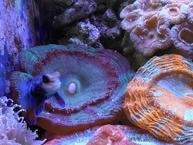Ocean Science STEM Activities