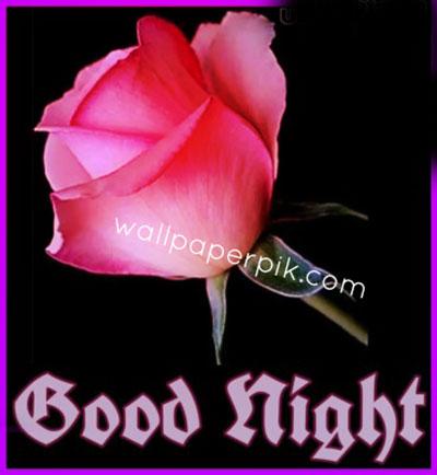 flower rose good night images wallpaper download