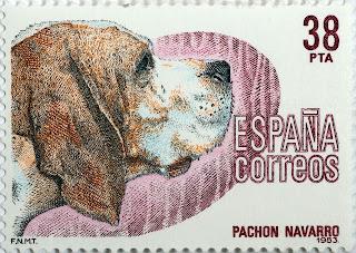 PACHÓN NAVARRO
