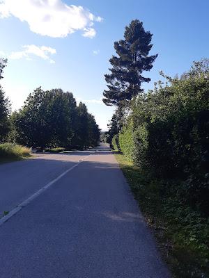 Vehreä omakotialue, jossa taloja ei näy asfalttitietä reunustavien pensaiden takaa