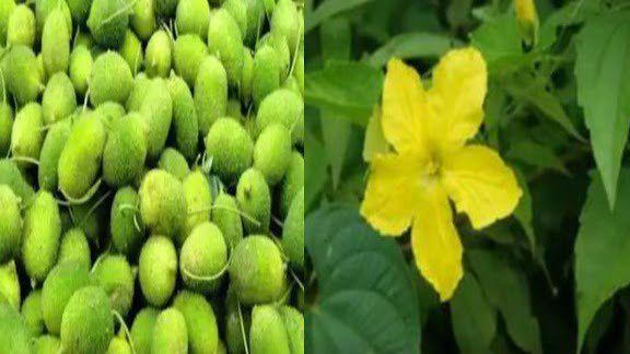 चमत्कारी है ये पौधा, सांप के जहर को भी 5 मिनट में कर देता है बेअसर, इस्तेमाल करना बेहद आसान
