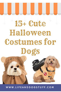 15+ Cute Halloween Costumes for Dogs.