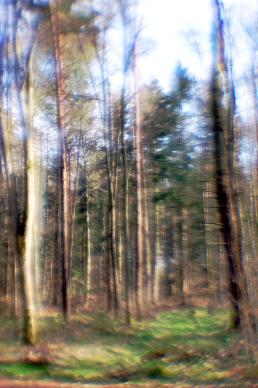 Bilder mit dem Kollimator-Selbstbau-Objektiv #6 — Traumwald oder Wald zum Träumen