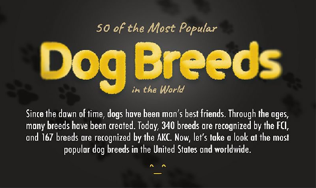50 of the Most Popular Dog Breeds in the World #infographic