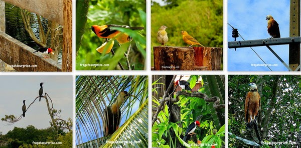 Fauna do Pantanal - aves pantaneiras