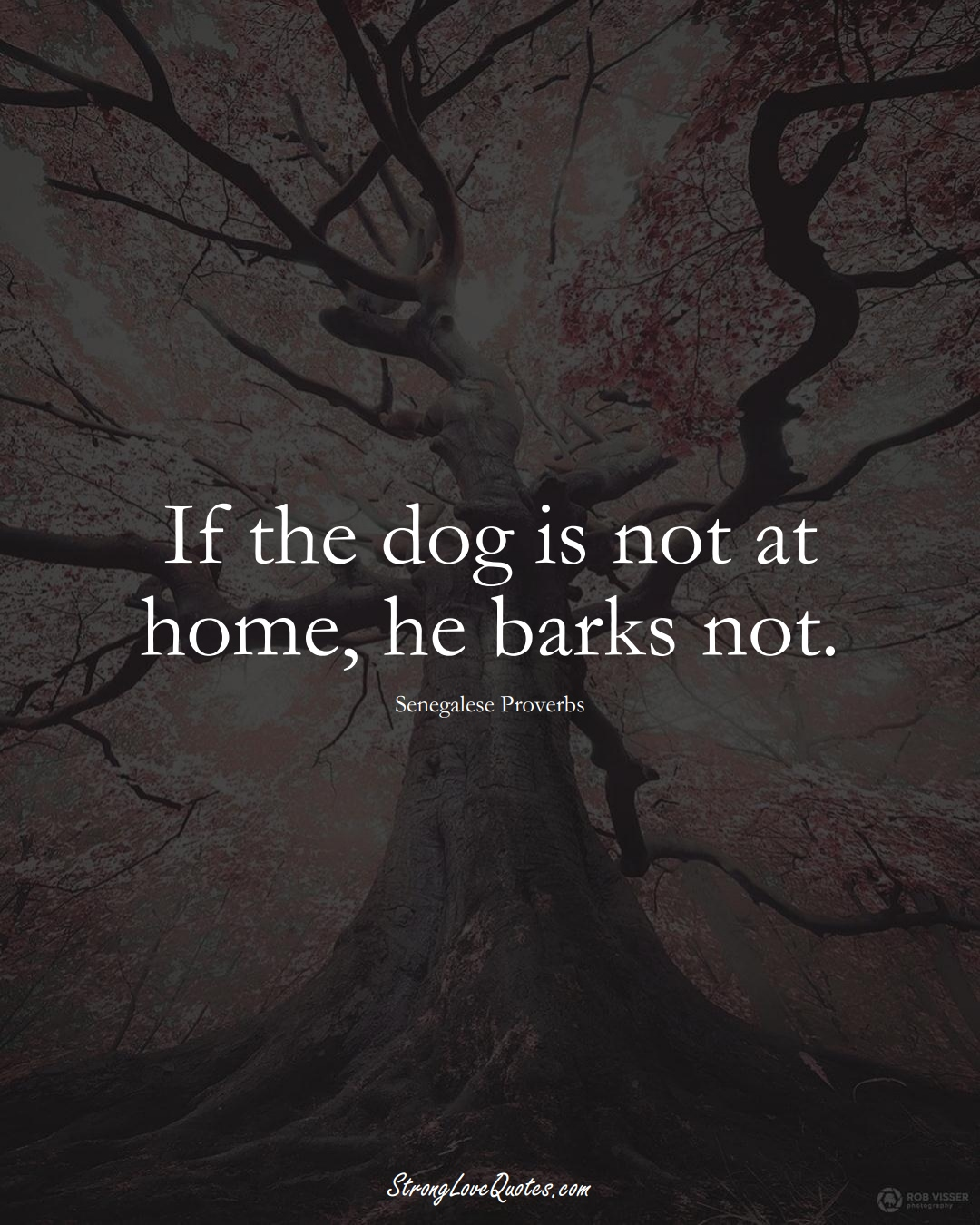 If the dog is not at home, he barks not. (Senegalese Sayings);  #AfricanSayings