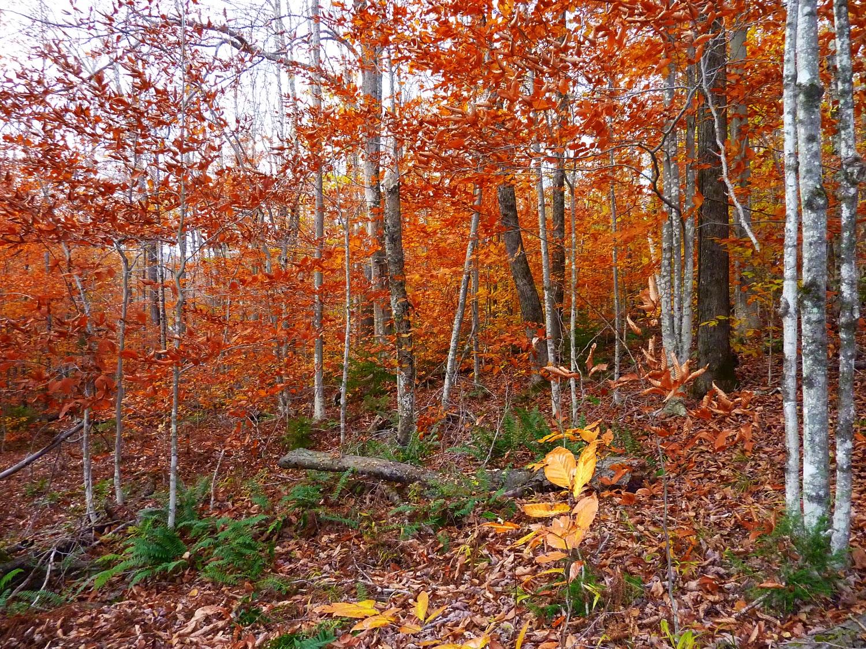 Robert Frost Trail, Vermont