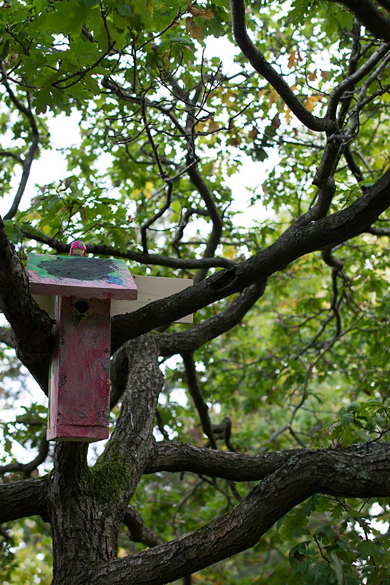 Bygg och måla en egen fågelholk i giftfritt material.