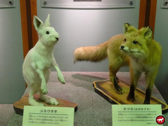 Lapin et renard de Hokkaido