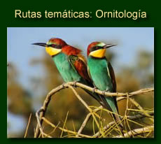 http://iberian-nature.blogspot.com.es/p/rutas-tematicas-ornitologia.html