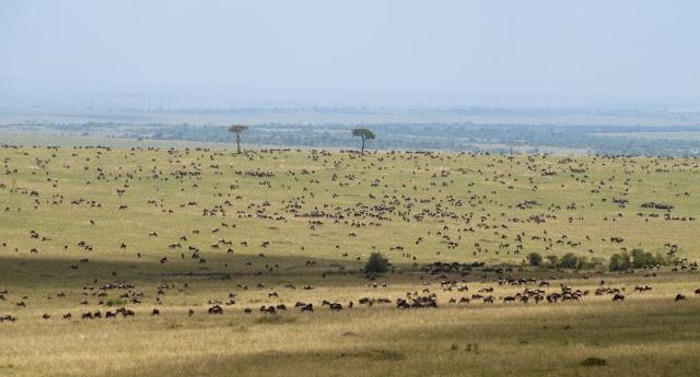 Masai Mara Kenia, Fotosafari