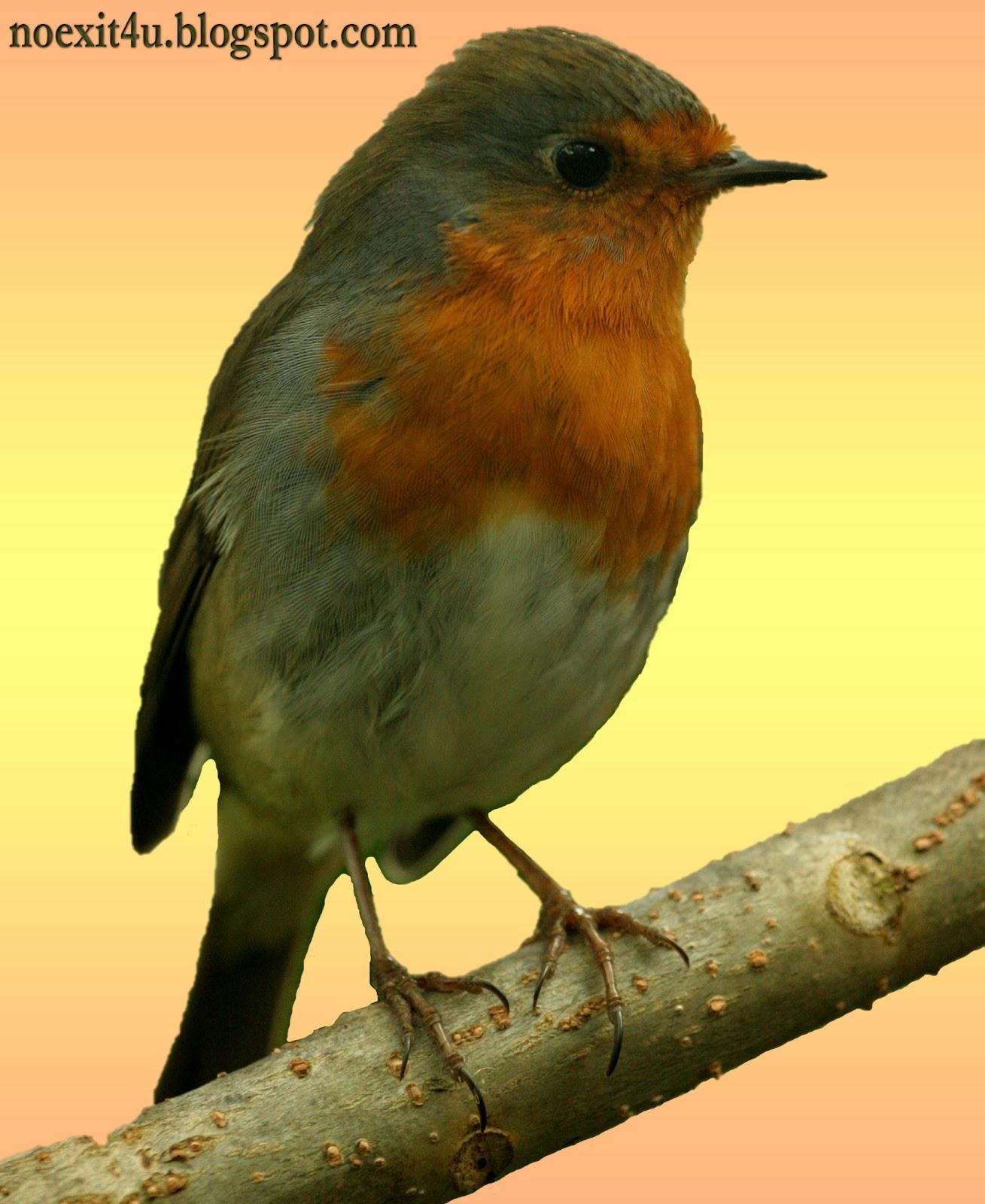 HIGH DEFINITION BIRD WALLPAPER