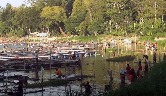 Fenomena 'Koyo', Ribuan Ikan di Ranu Klakah Mabuk