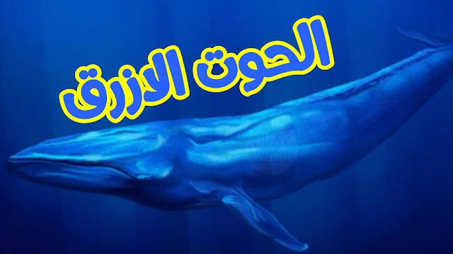 الحوت الازرق | كل ماتريده عن الحوت الازرق | اجيال الاندلس