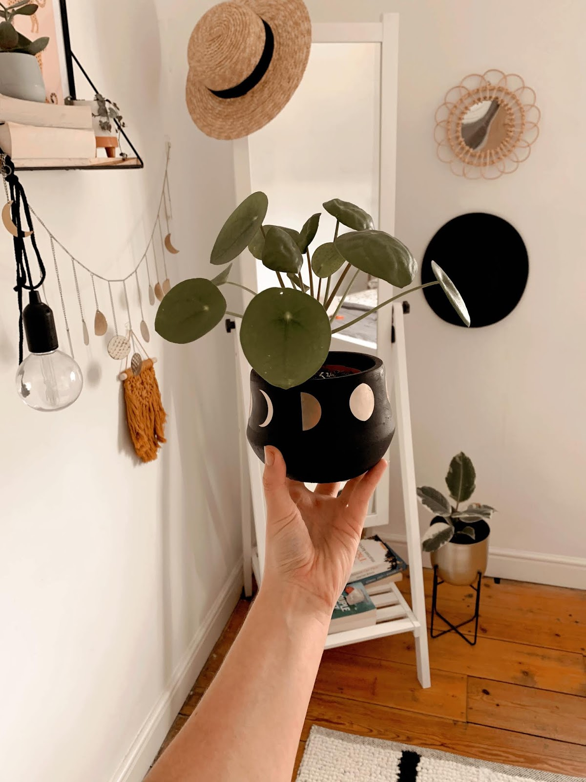 chinese money plant in sass and belle planter