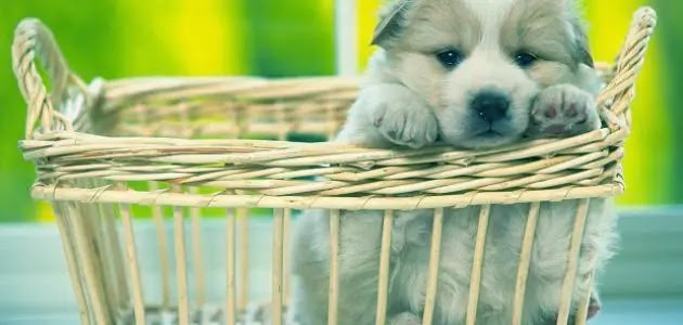 Types of pets and their dangers to humans