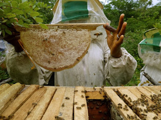 Beekeeping is an ancient tradition in Ethiopia
