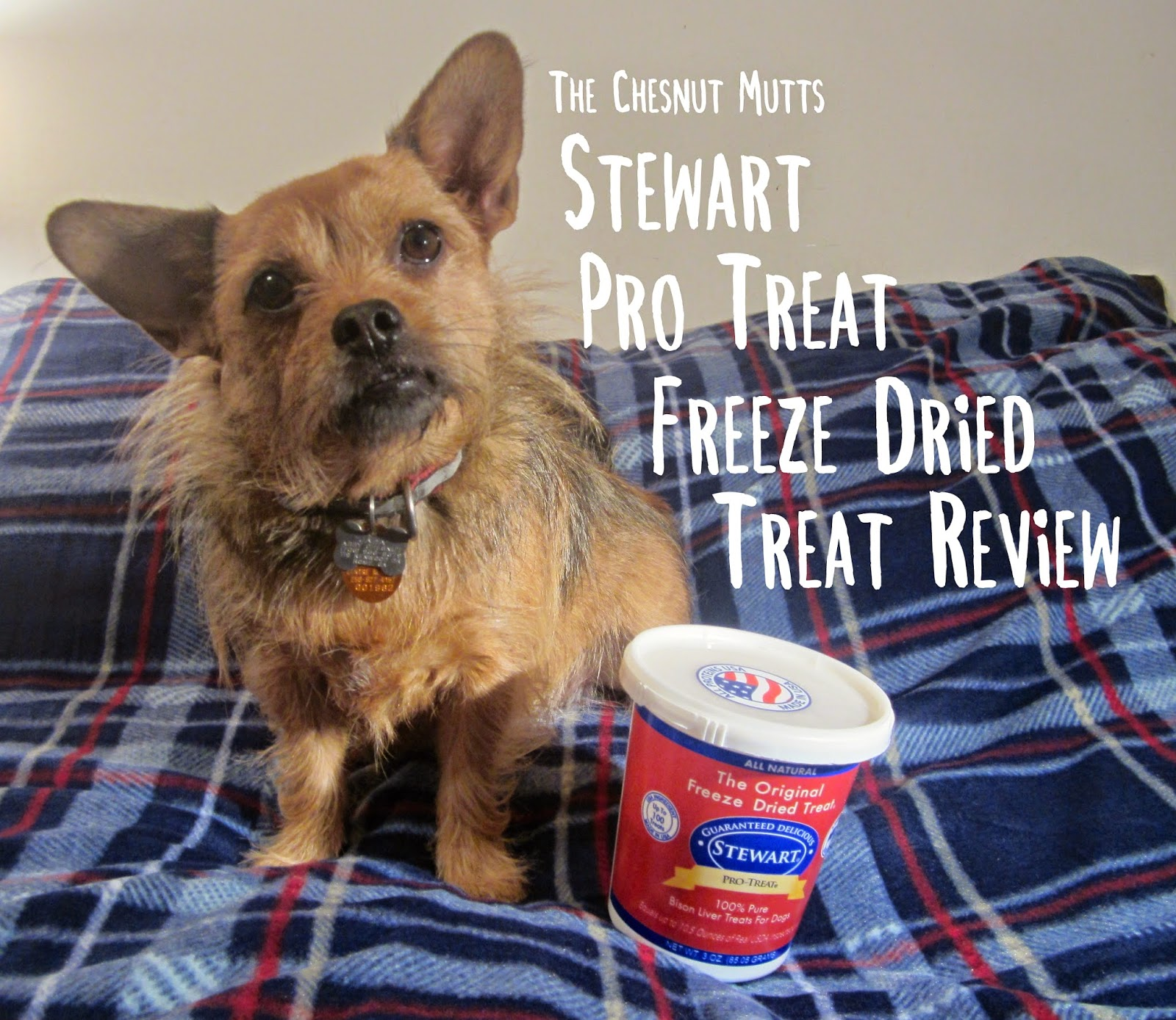 The Chesnut Mutts Stewart Pro-Treat Freeze Dried Dog Treat Review