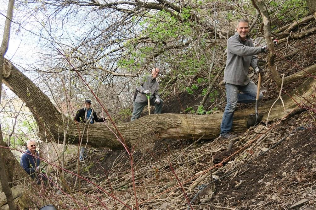Photo : trois hommes sur une petite côte de terre avec des arbres à grandes racines, utilisant des pelles pour retirer les déchets accumulés durant l'hiver.