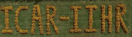 ICAR-IIHR Banglore How to get developed Seeds from IIHR Online