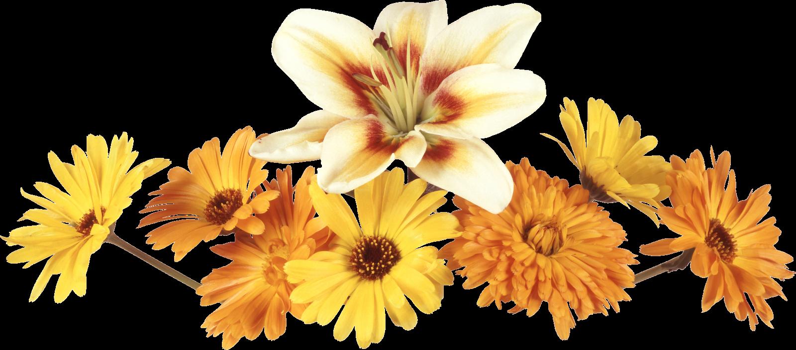 Marcos Esquineros Para Fotos De Flores: ® Gifs Y Fondos Paz Enla Tormenta ®: IMÁGENES DE FLORES