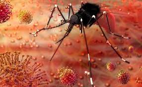 Zika 14 case confirmed- ಡೆಡ್ಲಿ ಝಿಕಾ ವೈರಸ್ ಪ್ರವೇಶ: 14 ಪ್ರಕರಣ ದೃಢ, ಕೇರಳ ತಲ್ಲಣ